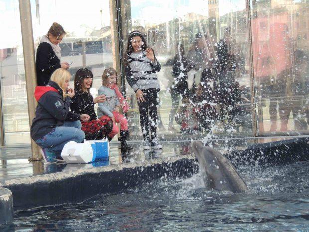 Battesimo cuccioli AMBRA Angiolini delfini