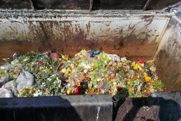 spazzatura volpara