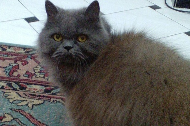 gatto-trovato-a-campomorone