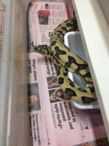agrizoo-serpente